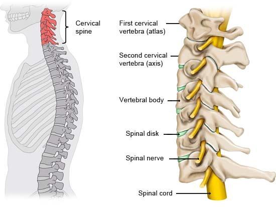 colonna cervicale dolore male cervicalgia postura osteopata