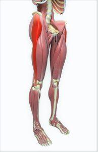Artrosi dell' anca (coxartrosi): quali sono i sintomi e quali le cure
